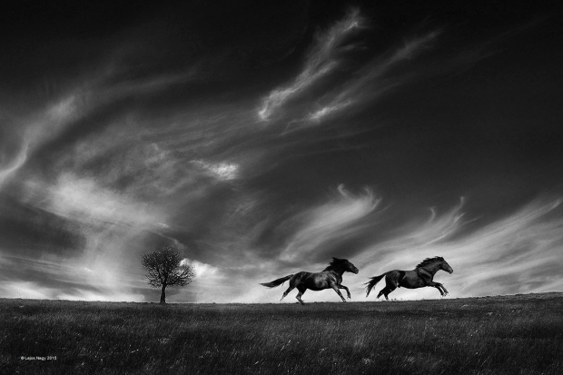 Running with the wind foto Nagy Lajos