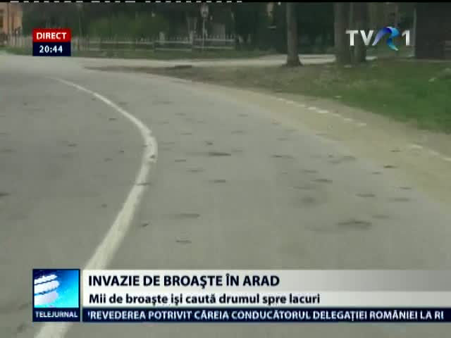 Invazie de broaşte