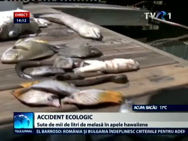 Accident ecologic