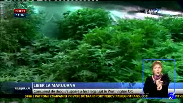 Washington, liber la marijuana