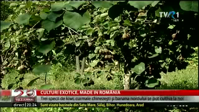 Culturi exotice made in Romania