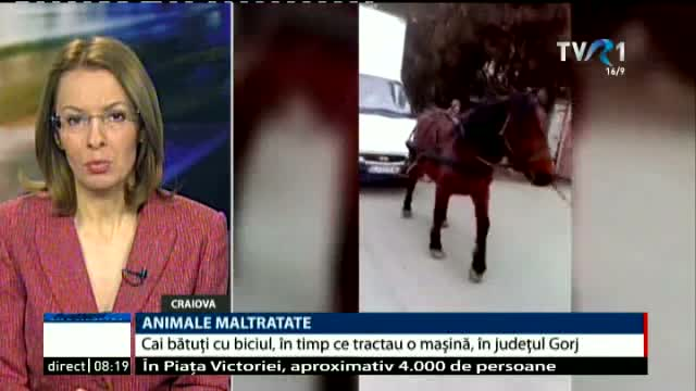 Animale maltratate