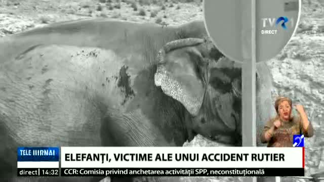 Elefant accidentat
