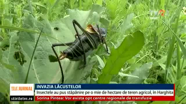 Invazia lăcustelor