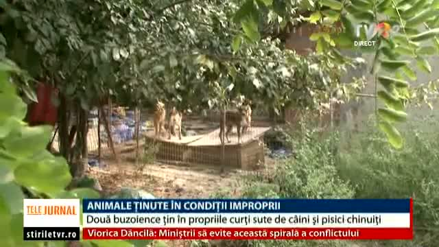 Animale ținute în condiții improprii