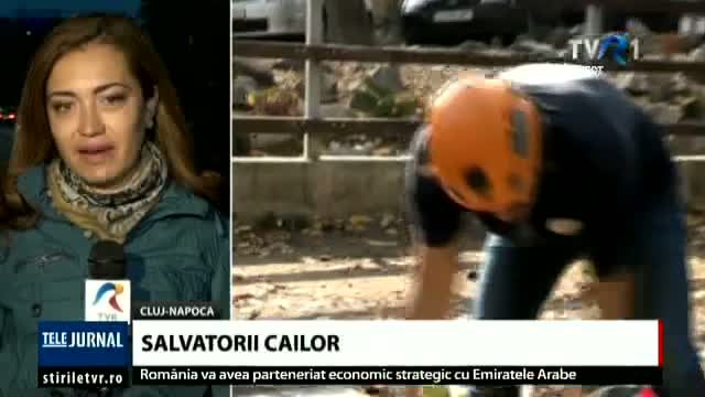 Salvatorii cailor