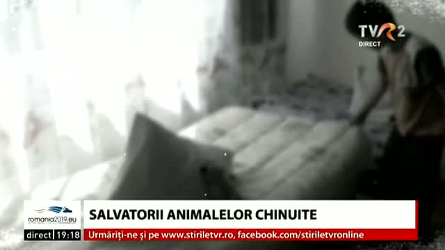 Salvatorii de animale chinuite