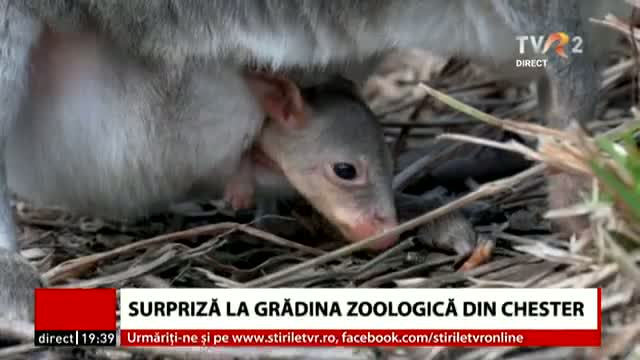 Surpriză la Zoo