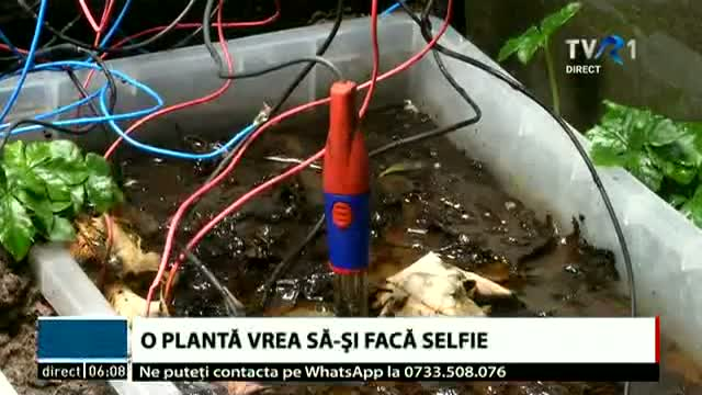Planta care își face selfie