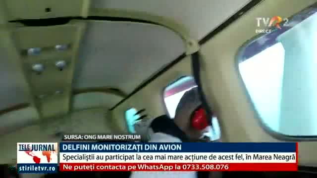 Delfini monitorizați din avion