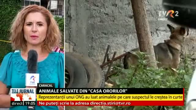 Animale salvate din casa ororilor