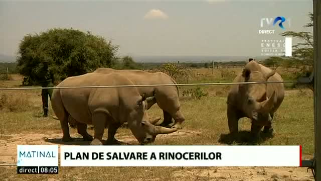 Plan de salvare a rinocerilor
