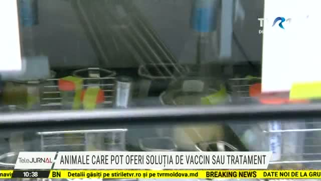 Animale care pot oferi soluția de vaccin sau tratament
