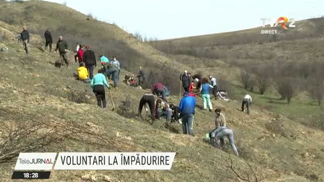 Voluntari la împădurire
