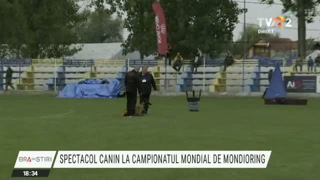 Spectacol canin